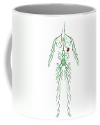 Lymphatic System, Illustration Coffee Mug