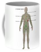 Lymphatic System In Male Anatomy Coffee Mug