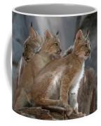 Lynx Trio Coffee Mug