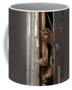 Macaque Peeking Out Coffee Mug