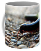 Macro  Millipede Coffee Mug