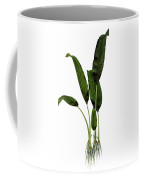 Macrotaeniopteris Prehistoric Plant Coffee Mug