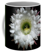 Magic Of The Night Coffee Mug