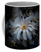 Magnoila Tree Blossum Coffee Mug