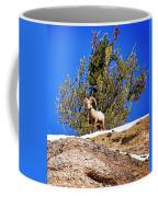 Majestic Big Horn Sheep Coffee Mug