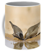 Male And Female Eurasian Blackcap Coffee Mug