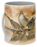 Male And Female Eurasian Blackcaps Coffee Mug