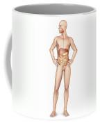 Male Body Standing, With Full Digestive Coffee Mug