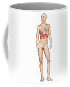 Male Body Standing, With Full Coffee Mug