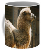 Male Camel Head Coffee Mug