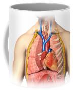 Male Chest Anatomy Of Thorax Coffee Mug