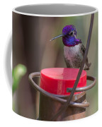 Male Costa Hummingbird Coffee Mug