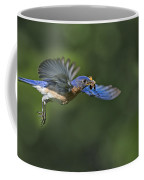 Male Eastern Bluebird Coffee Mug
