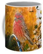 Male Finch In Autumn Leaves Coffee Mug