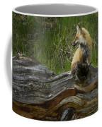 Male Fox   #3575 Coffee Mug