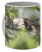 Male House Finch Coffee Mug