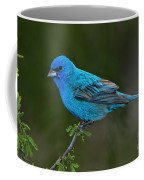 Male Indigo Bunting Coffee Mug
