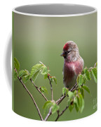 Male Lesser Redpoll  Carduelis Cabaret Coffee Mug