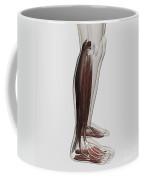 Male Muscle Anatomy Of The Human Legs Coffee Mug