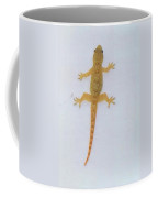 Male Nocturnal Lizard Coffee Mug