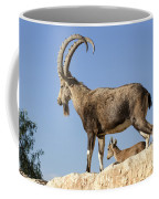Male Nubian Ibex Coffee Mug