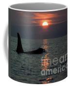Male Orca At Sunset Off San Juan Island Washington 1986 Coffee Mug