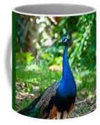Male Peacock Coffee Mug