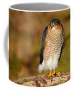 Male Sparrowhawk Coffee Mug