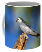 Male Violet-green Swallow Coffee Mug