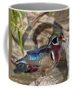 Male Wood Duck Dwf029 Coffee Mug