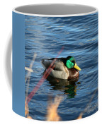 Mallard Drake Passing  Coffee Mug