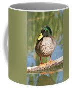 Mallard Duck On Log Coffee Mug