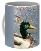 Mallard Duck Portrait Coffee Mug