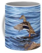 Mallard Duck Showing Off Coffee Mug