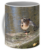 Mallard Duck Stretch  Coffee Mug