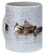 Mallard Ducks Sleeping Coffee Mug