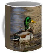 Mallard Square Format Coffee Mug