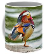 Mandarin Duck Posing Coffee Mug