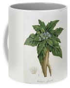 Mandragora Officinarum Coffee Mug by LFJ Hoquart