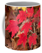 Maple Leaf Palette Coffee Mug