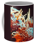 Marigold Petal Sem Coffee Mug