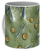 Marjoram Leaf Sem Coffee Mug