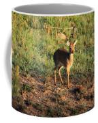 Masai Mara Dikdik Deer Coffee Mug