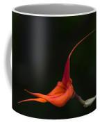 Masdevallia Orchid II Coffee Mug