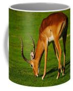 Mature Male Impala On A Lawn Coffee Mug