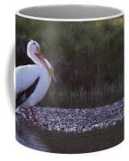 Mature Pelican   #9337 Coffee Mug