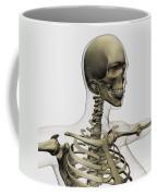 Medical Illustration Of A Womans Skull Coffee Mug by Stocktrek Images