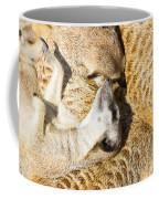 Meerkat Group Resting Coffee Mug