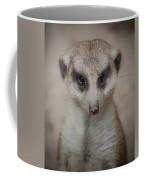 Meerkat Stare-down Coffee Mug