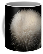 Mesolite And Fluoroapophyllite Coffee Mug